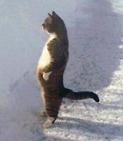 猫人間peg.jpeg